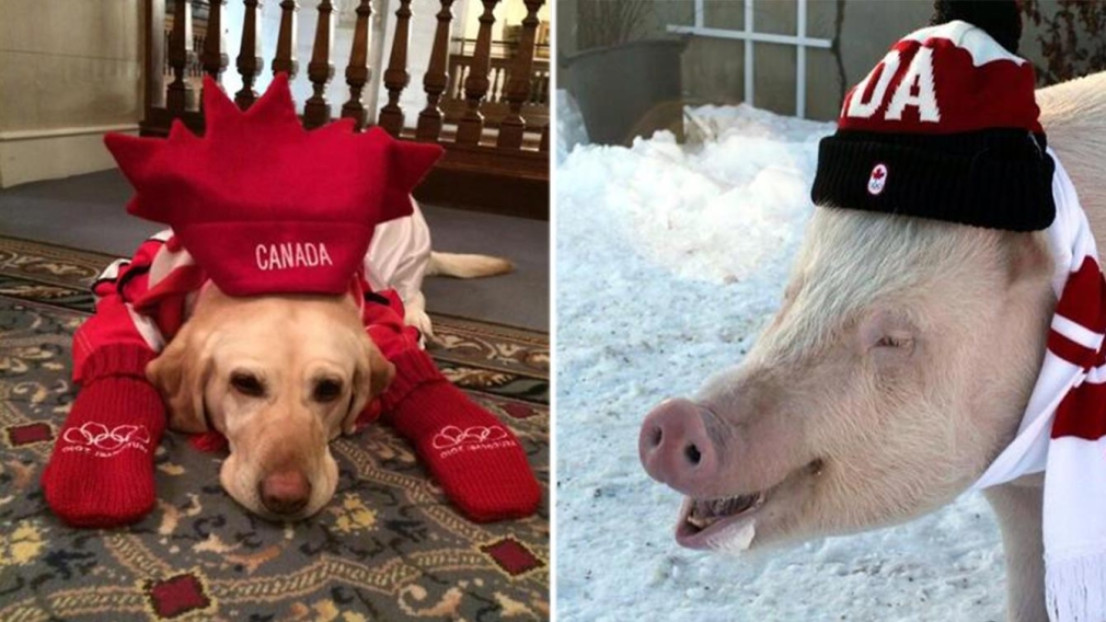 Thought only humans cheered for Team Canada? Silly human