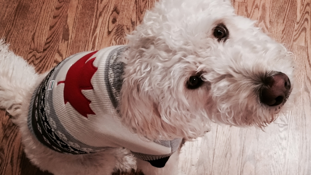 Moment of paws for Team Canada's furry friends