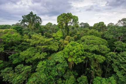 Peruvian forest in the Amazon Jungle